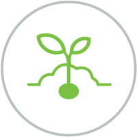 Seeds_icon